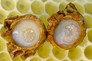 Bee product royal jelly